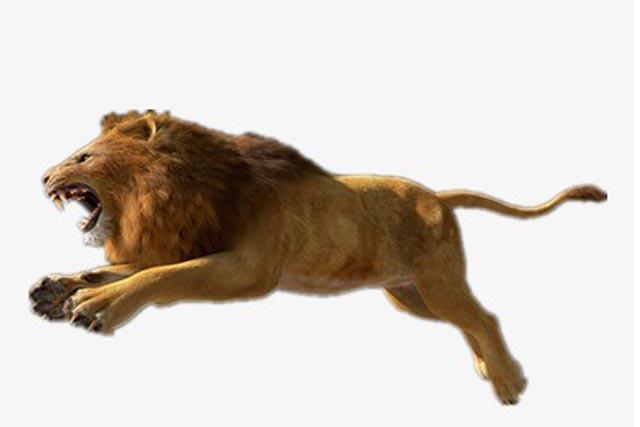 【シマウマを追うライオンになるな!】